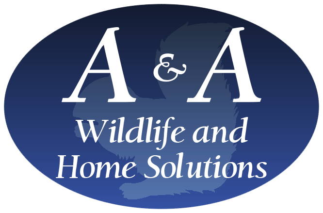 Atlanta Rodent, Rat, Mouse, Squirrel Removal Exclusion A & A Wildlife