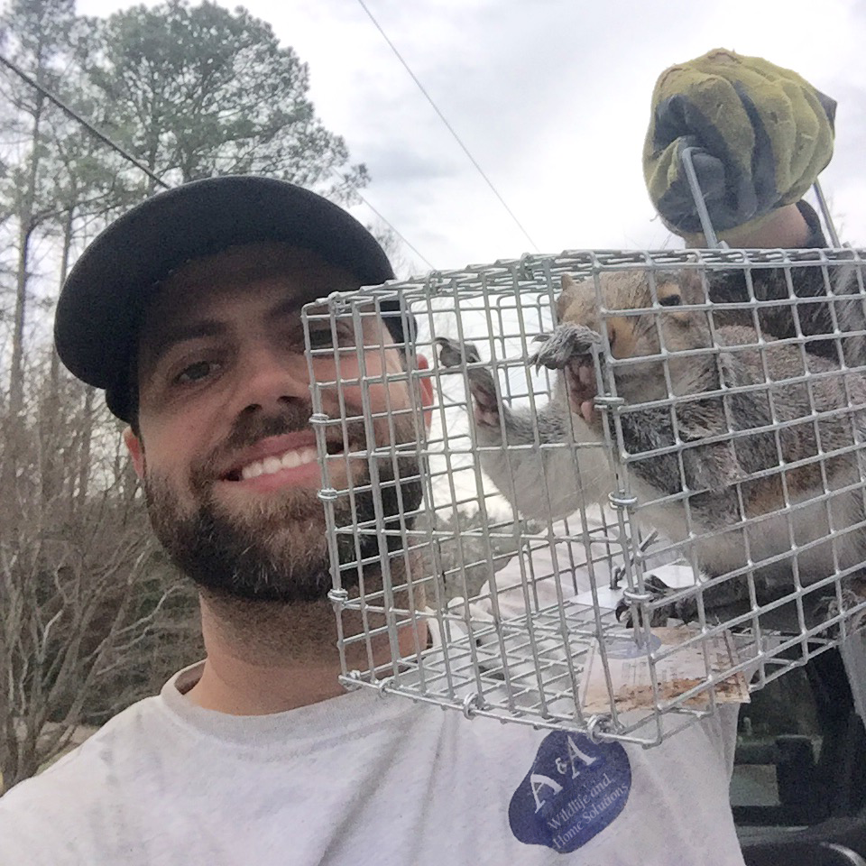 wildlife-removal-squirrel-atlanta-alpharetta-owner