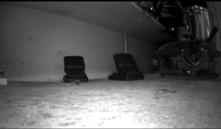 rat-traps-cabinet-marietta-removal