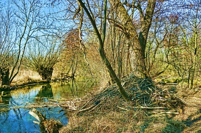 beaver dam atlanta