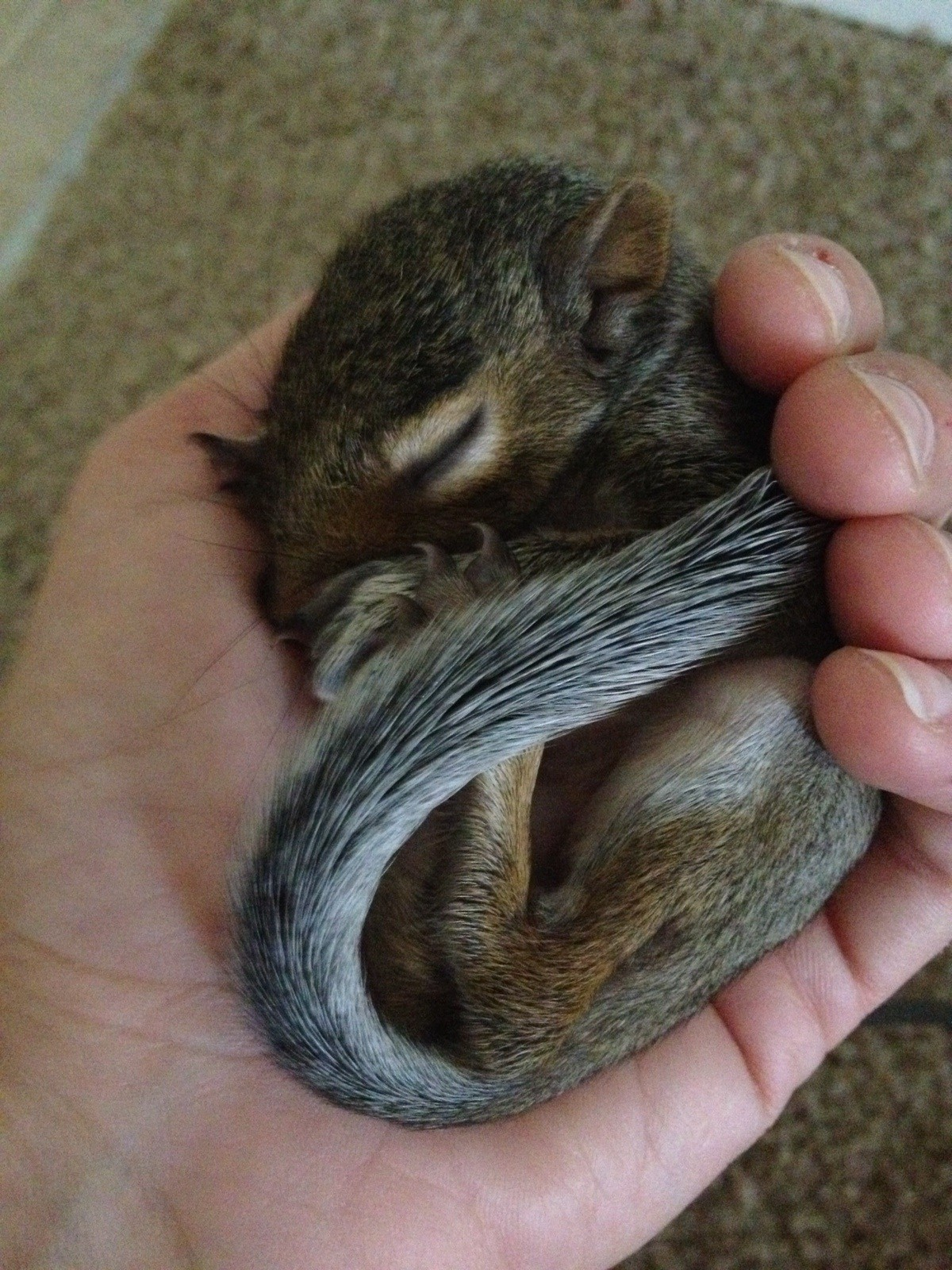 A Amp A Wildlife And Home Solutions Metro Atlanta Squirrel